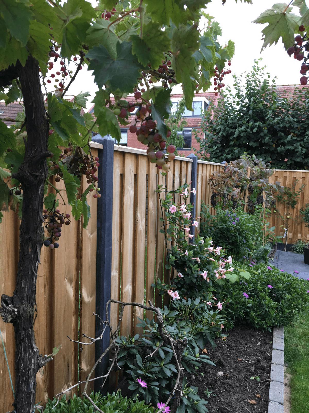 Ihr Garten in Zeiten von Corona